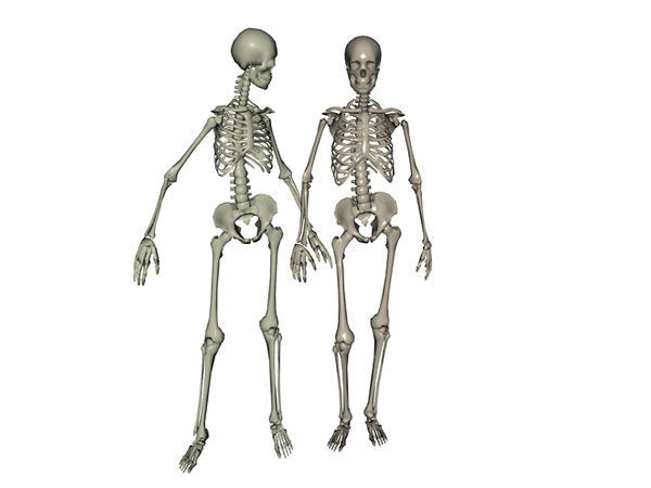 anatomical man woman human skeleton models, (.3ds) 3d studio max, Skeleton